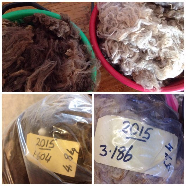 A bit of each of these sheepfleeces are being washedhellip